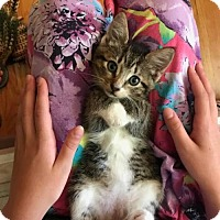 Adopt A Pet :: Mark - Trexlertown, PA
