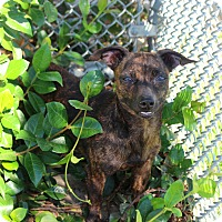 Adopt A Pet :: Olive - Yuba City, CA