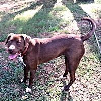 Adopt A Pet :: Gracie Mae - Fredericksburg, VA