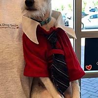 Adopt A Pet :: Prescott - Phoenix, AZ