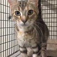 Adopt A Pet :: Hazel - Fort Madison, IA