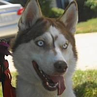 Adopt A Pet :: Spencer - Holly Springs, NC