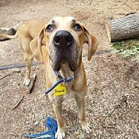 Adopt A Pet :: Frank - Minneapolis, MN