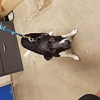 Adopt A Pet :: Bubba - Camden, DE