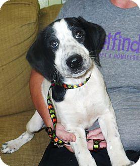 Hound (Unknown Type) Mix Puppy for adoption in Eastpoint, Florida - Dot