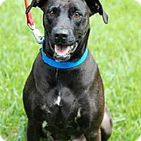 Adopt A Pet :: Angie - New Boston, MI