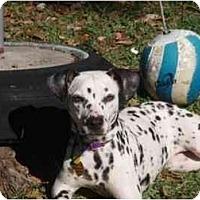 Adopt A Pet :: Julie - League City, TX