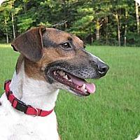 Adopt A Pet :: Chaucer - Albany, NY