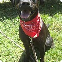 Adopt A Pet :: Benton - Crescent City, CA