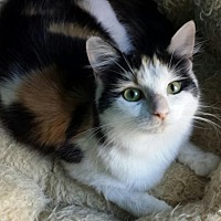 Adopt A Pet :: Katarina - Knoxville, TN