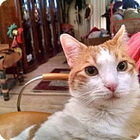Adopt A Pet :: Riley - Laguna Woods, CA