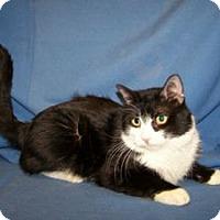 Adopt A Pet :: Cushy - Colorado Springs, CO