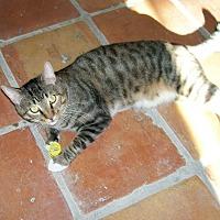 Adopt A Pet :: Sven - Scottsdale, AZ