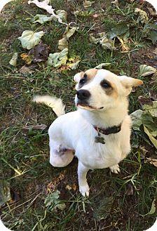 Australian Cattle Dog Mix Dog for adoption in Charlotte, North Carolina - Bindi