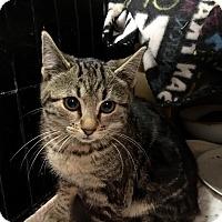 Adopt A Pet :: Macey - East Brunswick, NJ