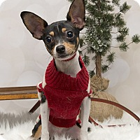 Adopt A Pet :: Dewey~Adopted! - Troy, OH