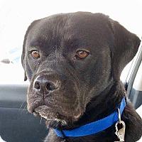 Adopt A Pet :: Russell - Virginia Beach, VA