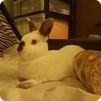 Adopt A Pet :: Coconut - Oak Park, IL