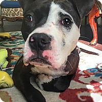 Adopt A Pet :: Dalon - Pottstown, PA