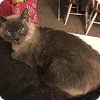 Adopt A Pet :: Rory - Manhattan, KS