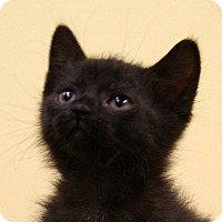 Adopt A Pet :: Poppy - Dundee, MI