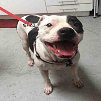 Adopt A Pet :: DAKOTA - Alameda, CA