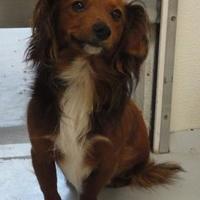Adopt A Pet :: Carter - Eagle River, WI