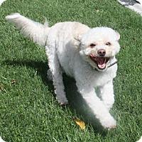 Adopt A Pet :: Matzy - Henderson, NV