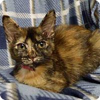 Adopt A Pet :: MRS. CUTIE - Fort Wayne, IN