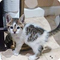 Adopt A Pet :: Loki - Sacramento, CA