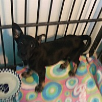Adopt A Pet :: Parity - Apache Junction, AZ