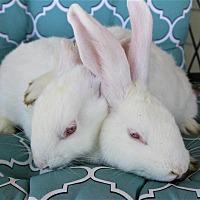 Adopt A Pet :: Minnie and Dotty - Hillside, NJ