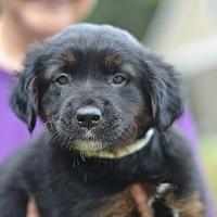 Adopt A Pet :: Philadelphia (A) - Zoo Litter - Acworth, GA