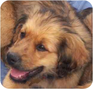Terrier (Unknown Type, Medium) Mix Puppy for adoption in Wake Forest, North Carolina - Hobbes