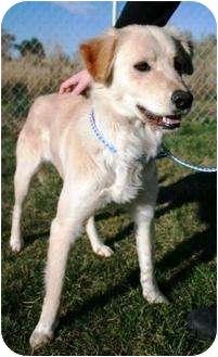 Labrador Retriever Mix Dog for adoption in Jerome, Idaho - 4759