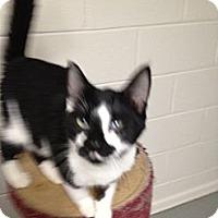 Adopt A Pet :: Freddy - Wenatchee, WA