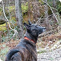 Adopt A Pet :: Django in NH - Jamestown, CA