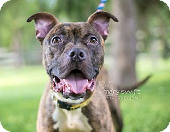 Terrier (Unknown Type, Medium)/Mixed Breed (Medium) Mix Dog for adoption in Reisterstown, Maryland - Rusty
