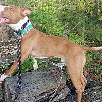 Adopt A Pet :: Jace - O'Fallon, MO