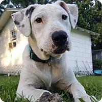 Adopt A Pet :: Bonnie - Gilbertsville, PA