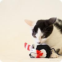 Adopt A Pet :: TULIP MELENDEZ - Houston, TX