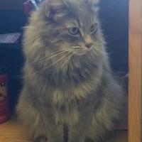 Adopt A Pet :: Fuzzy Boy - La Grande, OR