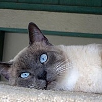 Adopt A Pet :: Koa - Lathrop, CA