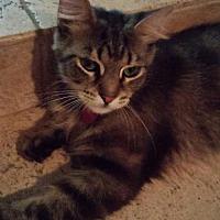 Adopt A Pet :: Jewel - Corona, CA