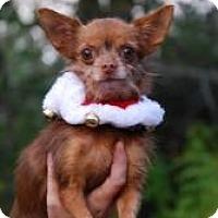 Adopt A Pet :: Sadie - New Milford, CT