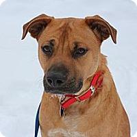 Adopt A Pet :: Mario - Hastings, NY