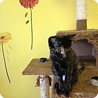 Adopt A Pet :: Millie - Mobile, AL