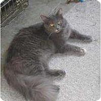 Adopt A Pet :: Paisley - lake elsinore, CA