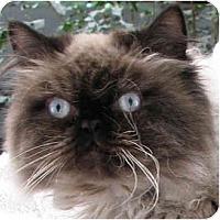 Adopt A Pet :: Lovie - Davis, CA