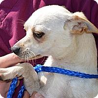 Adopt A Pet :: Waylan-adoption in progress :) - Marshfield, MA